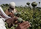 Od afgańskich pól makowych po kolumbijskie laboratoria. Jak epidemia przyblokowała narkobaronów