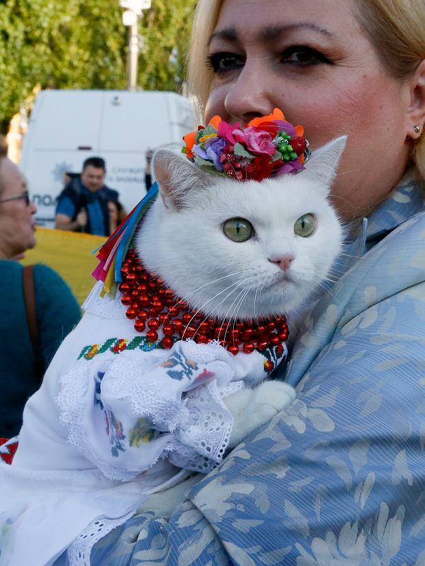 Na Majdan przyszli też zwykli obywatele, którzy obawiają się, że ugodowa postawa Zełenskiego oznacza oddanie Donbasu Rosjanom. Jedna z uczestniczek zabrała na protest swojego kota, przystrajając go w czerwono-czarne barwy. Fot. Efrem Lukatsky / AP Photo
