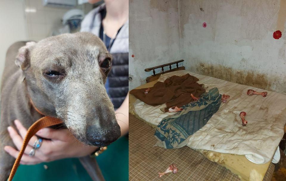 Obrońcy zwierząt w asyście policji weszli do hodowli psów na terenie woj. lubuskiego. Zwierzęta żyły w podłych warunkach, były zaniedbane, chorowały