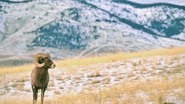 Park Yellowstone Montana / shutterstock