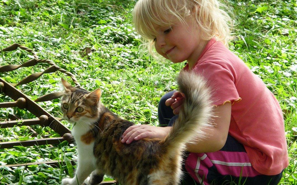 Koty również pomagają w obniżeniu stresu u dzieci.