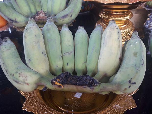 Są niebieskie, a do tego smakują jak waniliowe lody. Banany, które możesz posadzić we własnym ogródku