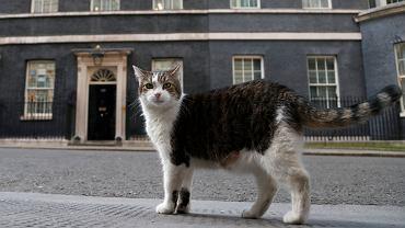 Britain Larry the Cat