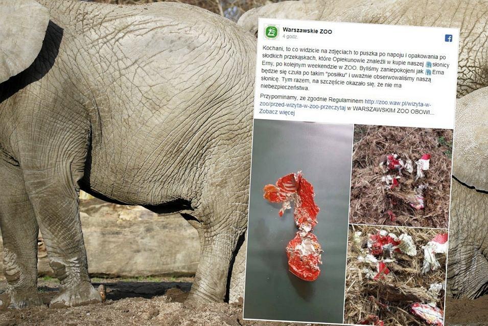 Opiekunowie znaleźli w kupie słonia puszkę po napoju i papierki po cukierkach