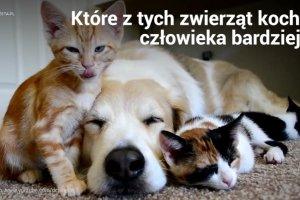 Które zwierzę kocha bardziej? Kot czy pies? Naukowcy już znają odpowiedź