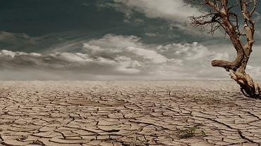 Last minute dla klimatu