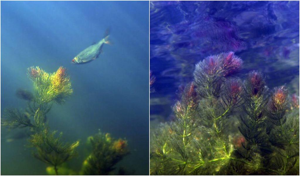 Widzieliście już setki zdjęć Jeziorka Czerniakowskiego. Ale TAKICH jeszcze nie!