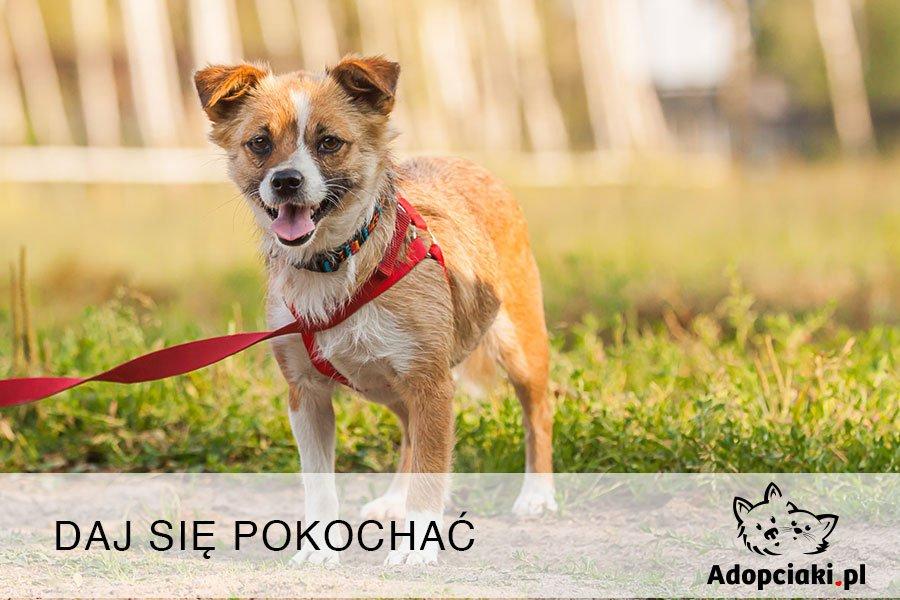Adopciaki.pl - wystartował program bezpiecznej adopcji czworonogów
