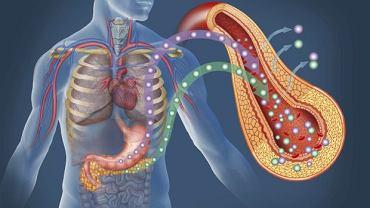 Bez insuliny i enzymów trawiennych, także wydzielanych przez trzustkę, nasze życie jest niemożliwe