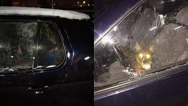 Pies zamknięty w zmarzniętym samochodzie na parkingu przed szpitalem w Kaliszu