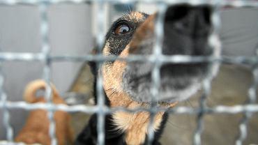 Pies w schronisku dla zwierząt - zdjęcie ilustracyjne