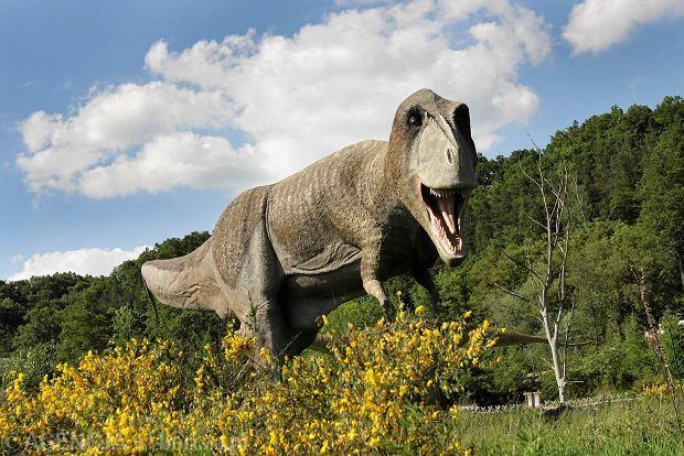 Między Mają a dinozaurem, czyli nasz polski Disneyland