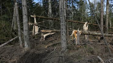 Tatry: zniszczenia po halnym
