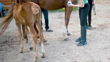 Nauka jazdy konnej (zdjęcie ilustracyjne)