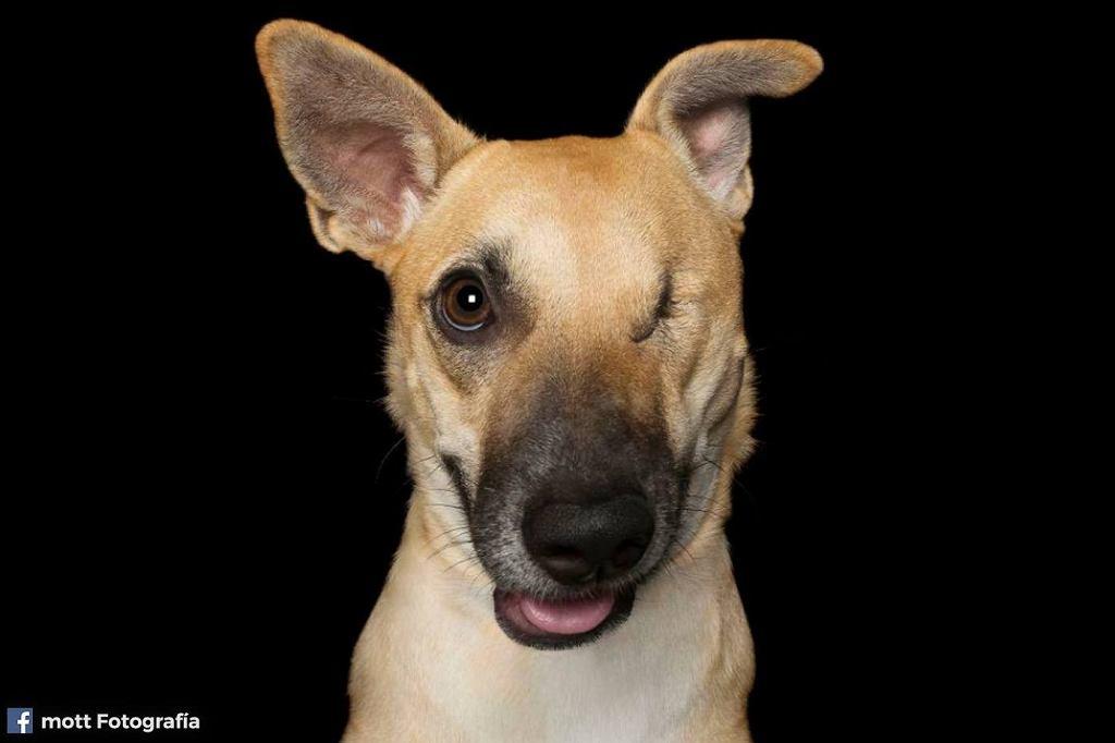 Idealnie Niedoskonali - to fotograficzny projekt, w którym bohaterami są niepełnosprawne psy.