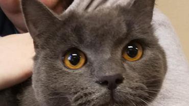 Kot znaleziony na dworcu we Wrocławiu