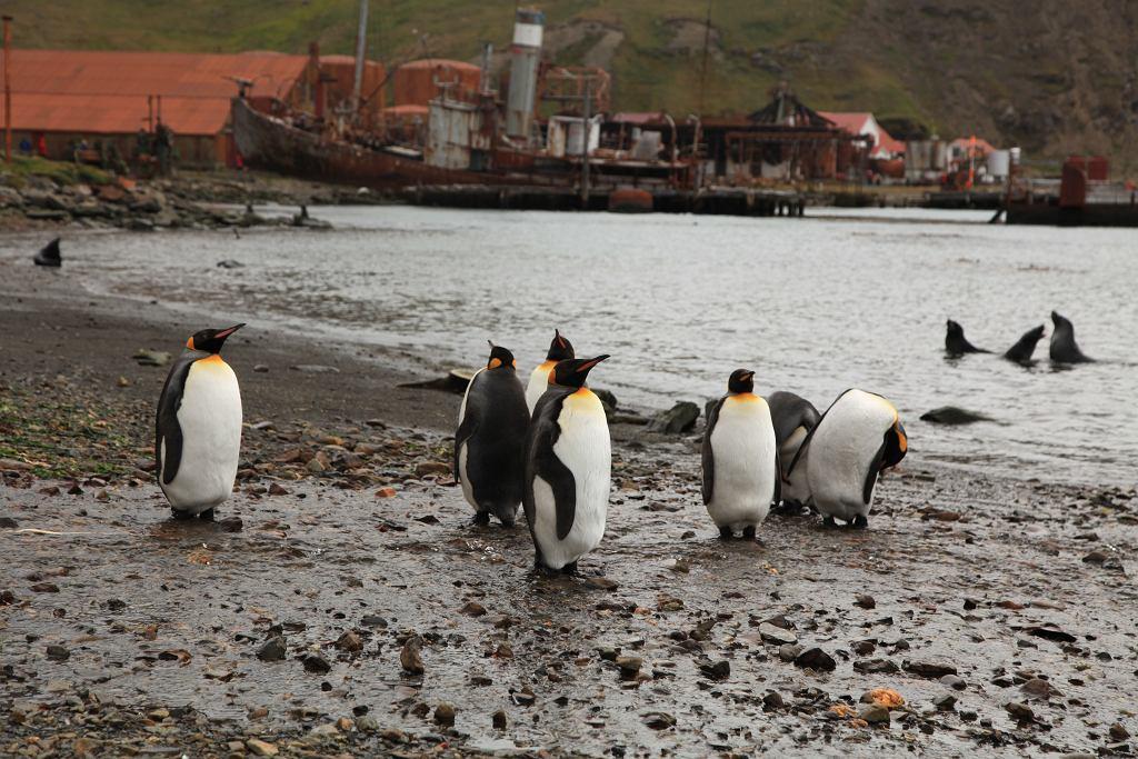 Kryjące smutne historie wyludnione miasta przyciągają rzesze ciekawskich. Dlaczego opustoszały z dnia na dzień? Najczęstszym, ale nie jedynym powodem są kryzysy gospodarcze. // Grytviken, Georgia Południowa. Dawny port morski ze stacją wielorybniczą, został założony przez Norwegów. Osiedle funkcjonowało w latach 1904-1965. Na wyspie znajdują się pozostałości zbudowanej tu przed II wojną światową skoczni narciarskiej oraz grób Ernesta Shackletona, irlandzkiego badacza Antarktydy.