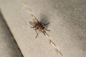 Sposoby na muchy. Jak się pozbyć much z mieszkania?