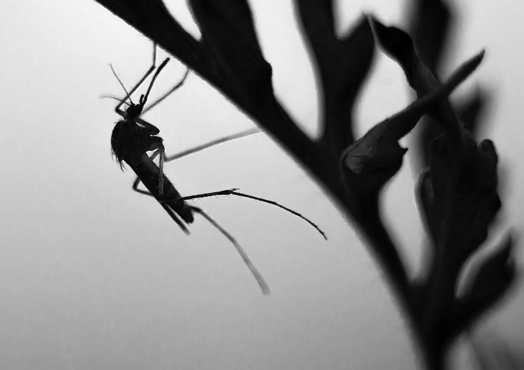 Co odstraszy komary? Naturalne i skuteczne sposoby na pozbycie się komarów