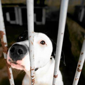 Schroniska dla zwierząt są przepełnione. Weterynarze przyznają, że uśpienie ślepych szczeniaków to lepsze rozwiązanie niż skazywanie ich na wieloletnie życie w ciasnej klatce