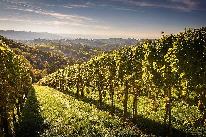 Winnice są najpiękniejsze jesienią, ale okażdej porze roku warto ruszyć wdrogę wposzukiwaniu ulubionego wina