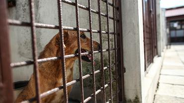 Krakowskie schronisko dla zwierząt - psy przywiezione z Radys