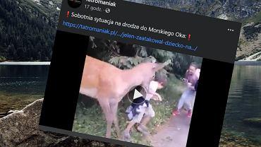 Jeleń zaatakował chłopca