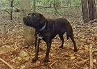 Poznań: Przywiązał psa do drzewa w lesie, założył kaganiec i zostawił na śmierć