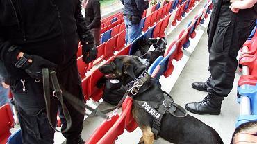 Materiały pirotechniczne znalezione przez policję na stadionie Górnika Zabrze