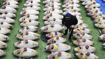 Handel tuszami tuńczyka na targu rybnym w Tokio.