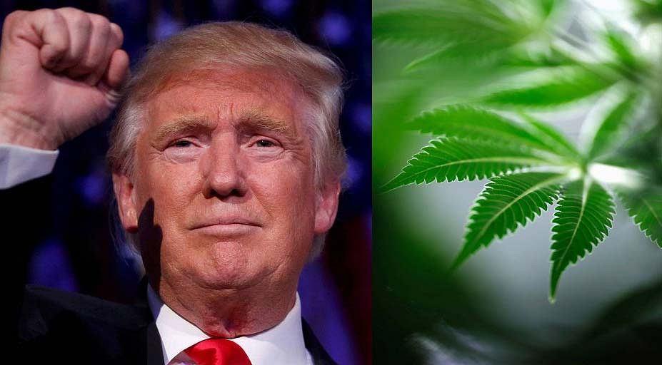 Kolejne stany legalizują użycie marihuany