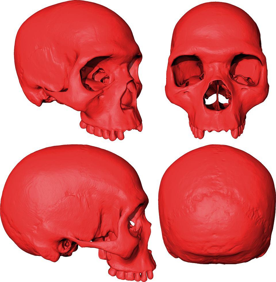 Wirtualna czaszka najstarszego przodka dzisiejszych ludzi