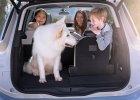 Za zostawienie psa w aucie grozi wysoki mandat. Przechodnie mają prawo zbić szybę