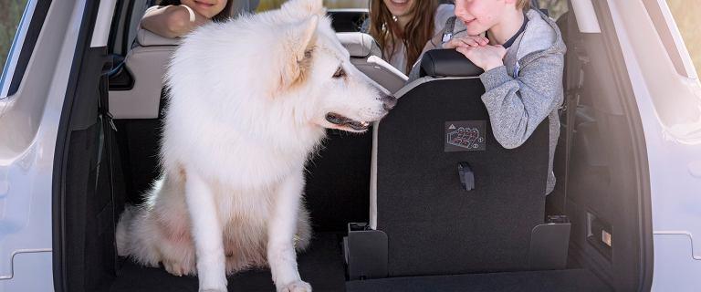 Długa podróż z psem samochodem i upalne dni - jak zadbać o naszego czworonoga?