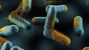 Do rozwoju zgorzeli gazowej dochodzi wskutek zakażenia bakteryjnego