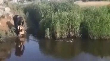 Policjanci uratowali rodzinę kaczek