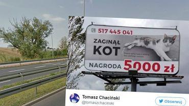 Billboard z zaginionym kotem w Szczecinie