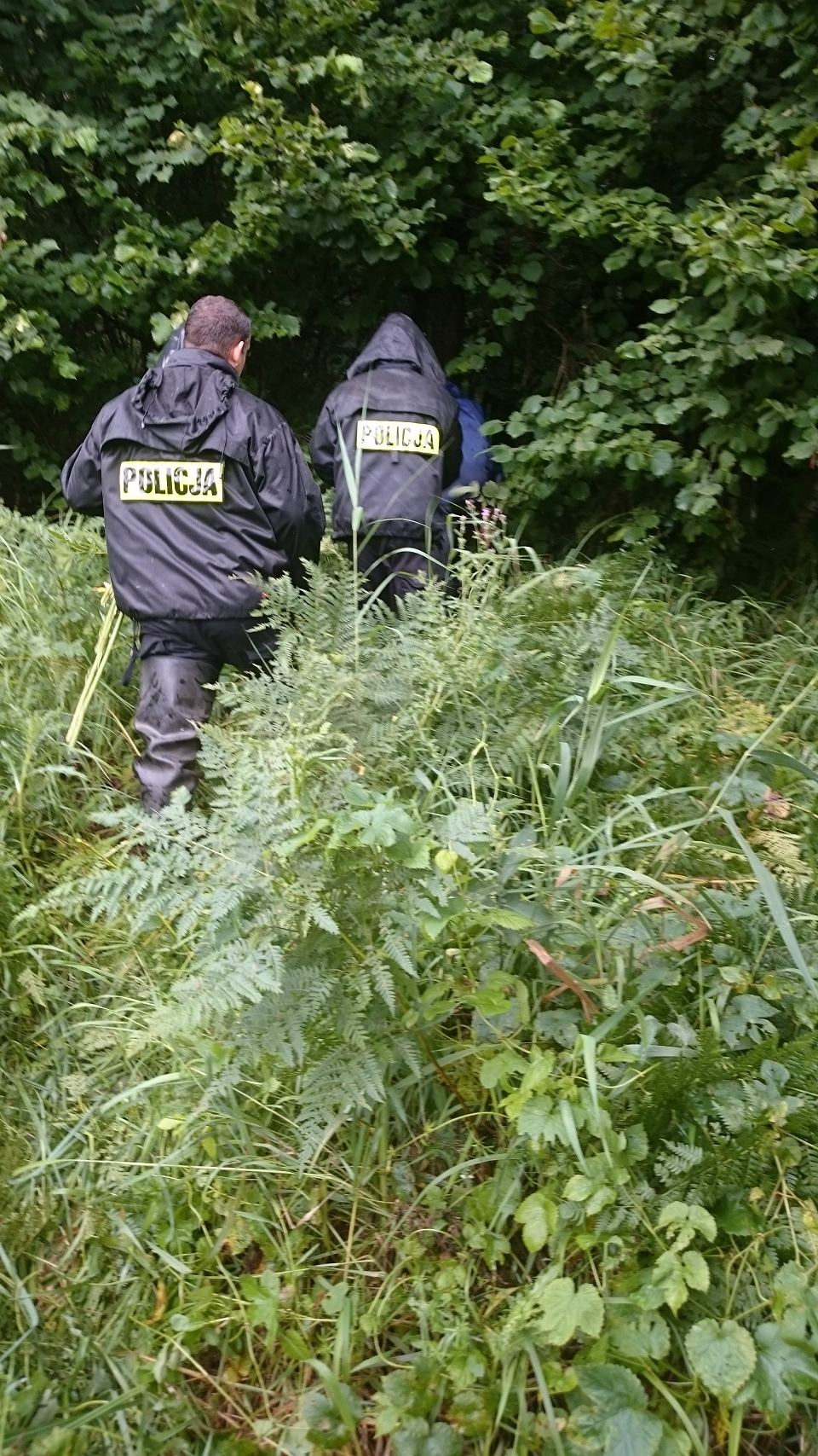 Plantacja Marihuany W Lesie Pod Ostródą Była Dobrze Ukryta