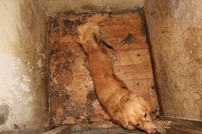 Fatalne warunki w hotelu dla zwierząt w Osiecku