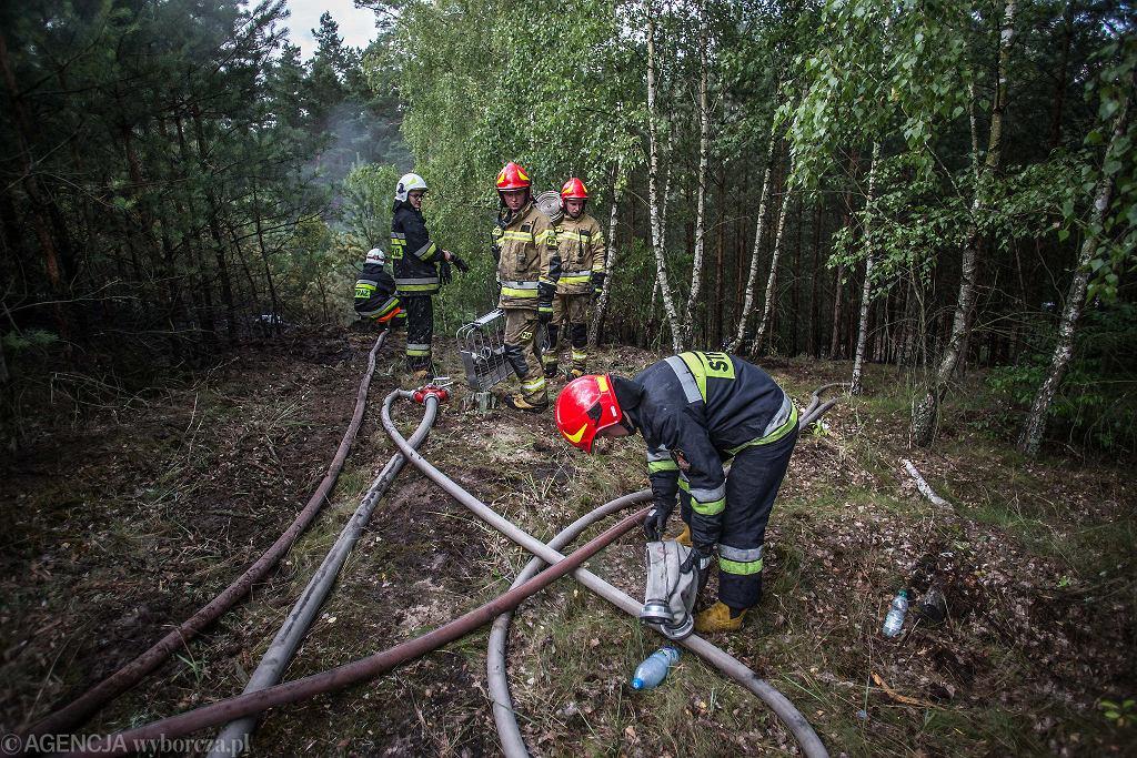 Dogaszanie pożaru lasu na Glinkach przy ul. Dąbrowa w Bydgoszczy