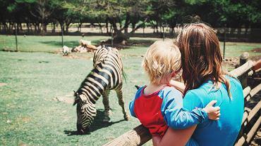 W zoo jesteśmy jedynie gośćmi. Nie przeszkadzajmy mieszkającym tam zwierzętom