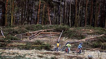 25 lutego 2017 r., Olsztyn. Wycięte drzewa w okolicach Jeziora Krzywego (Ukiel)