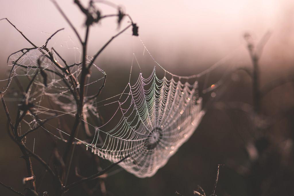Ugryzienie pająka. Jak wygląda i czy jest groźne?