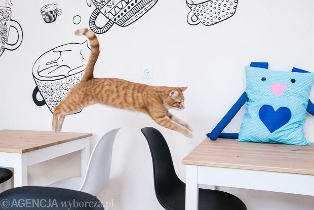 Kot Cafe