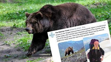 Rosja. Turyści zostali zaatakowani przez niedźwiedzia (zdjęcie ilustracyjne)