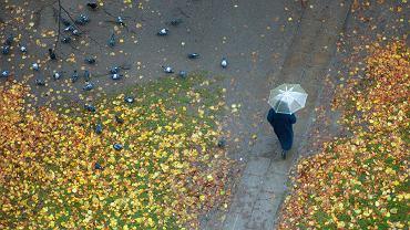 Długoterminowa prognoza pogody. Synoptycy przewidują dużo słońca i przelotne opady deszczu (zdjęcie ilustracyjne)