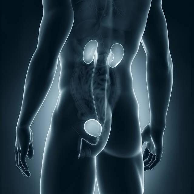Gruźlica układu moczowego u mężczyzn najczęściej obejmuje gruczoł krokowy oraz najądrza
