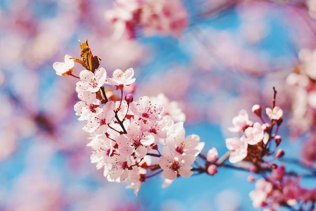 Znalezione obrazy dla zapytania: wiosna