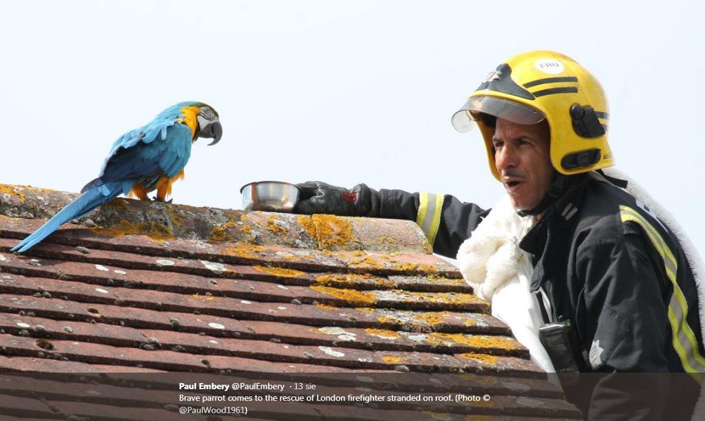 Papuga kazała spadać strażakowi, który chciał pomóc jej zejść z dachu