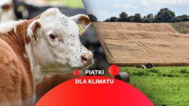 Raport ONZ: musimy zmienić rolnictwo i styl życia, żeby powstrzymać zmiany klimatu.